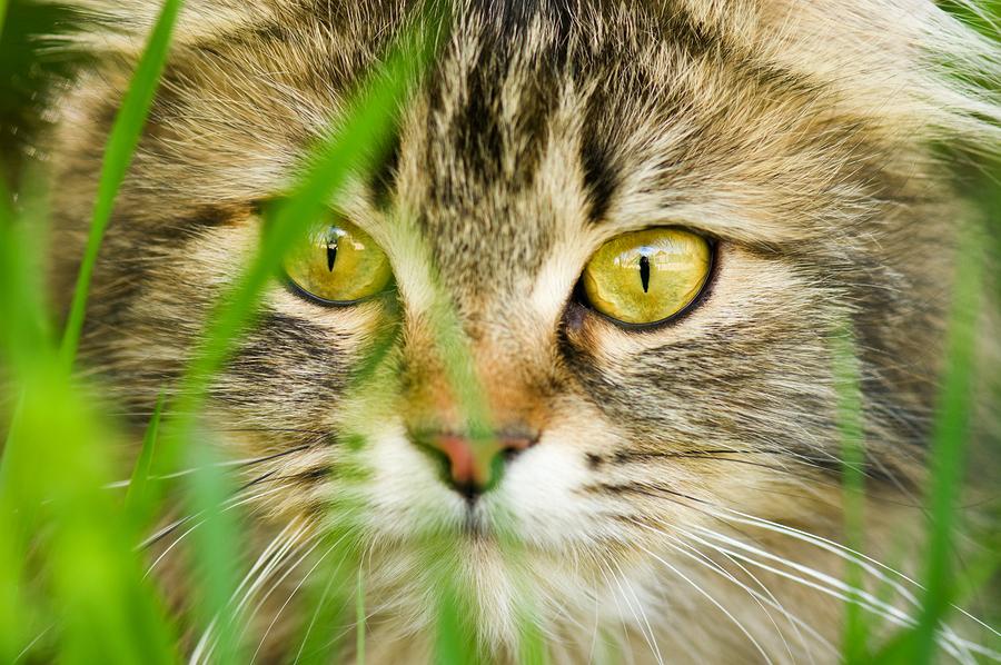 cat coat colors