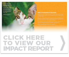 click to view our impact report