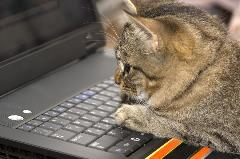 bigstock-Kitten--Laptop-2281338